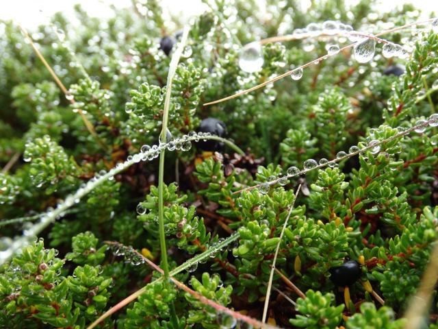 Disgelo e fioritura. L'Islanda si risveglia