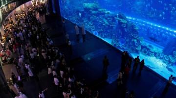 : la parete della vasca, lunga più di 32 metri, del Dubai Aquarium & Underwater Zoo è entrata nel Guinnes dei Primati (foto: Dubai Aquarium & Underwater Zoo)