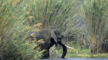 Elefanti da avvistare durante un safari sul lago Malawi (foto Alamy/Milestone Media)