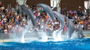 10) A Riccione, tra gli schizzi dei delfini nel parco acquatico di Oltremare (foto: Oltremare)