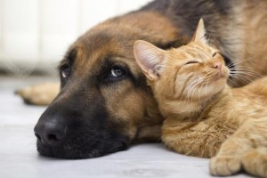 Cani&gatti: io parto con loro
