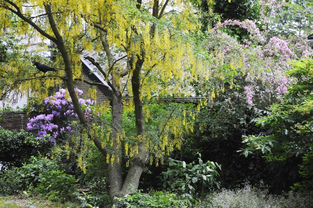 Amsterdam: aprono i giardini segreti