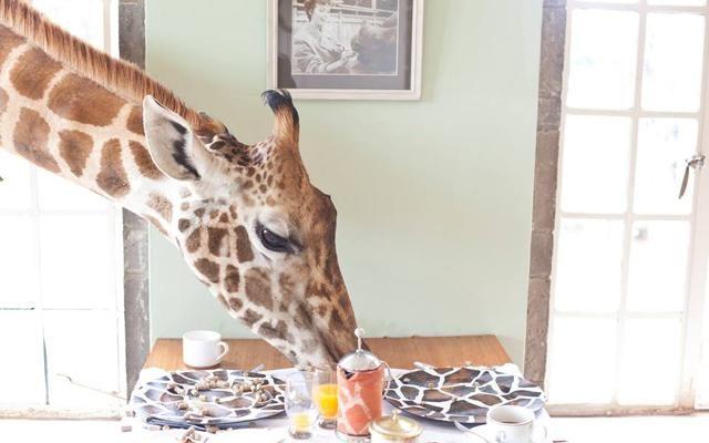 Foto A colazione con le giraffe