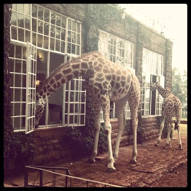 A colazione con le giraffe