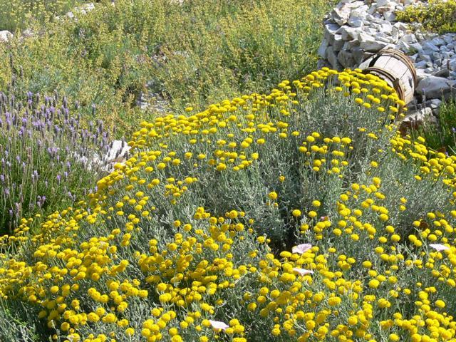 Losinj è un vero paradiso degli aromi, grazie alla natura lussureggiante, ricca di limoni, banani, eucalipti ed erbe medicinali. In questo tour all'insegna dell'olfatto, tappa imperdibile è il Giardino dei Profumi, un gioiello green con oltre 250 specie di piante mediterranee e 100 esotiche incorniciate dai pittoreschi muri a secco. Altre idee su questo Paese? Ecco le spiagge più belle.