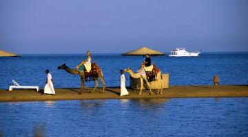Alla fine lo fanno tutti: una passeggiata a dorso di dromedario sulla spiaggia di El Gouna
