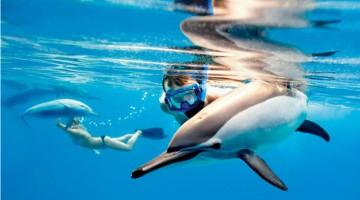 Per fare il bagno circondati dai delfini si va a Sataya Reef, meglio nota come Dolphin Reef