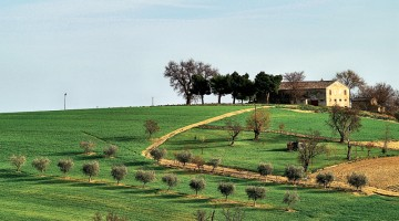 Verdeggiante e collinare la campagna nell'entroterra di Ancona