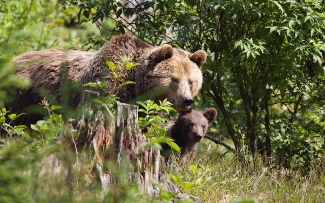 Foto Caso Daniza: i big 10 della fauna italiana. E dove trovarli