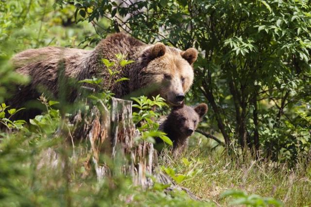 Caso Daniza: i big 10 della fauna italiana. E dove trovarli