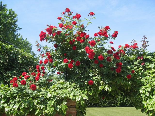 Giardini: aprono i roseti più belli ditalia dove viaggi