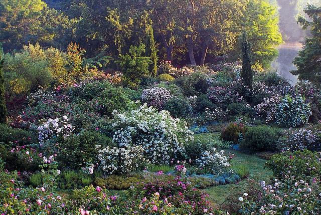 Giardini: aprono i roseti più belli d'Italia