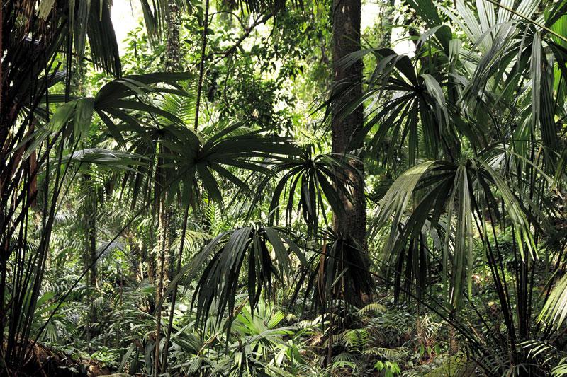La Vallé de Mai, sull'isola di Praslin, è una foresta vergine con quattromila palme di coco de mer e migliaia di farfalle, uccelli mosca e pappagalli neri (foto: Alamy/Milestonemedia)