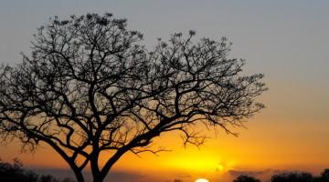 La natura, in Sudafrica, è rappresentata al meglio dai grandi parchi, dove un numero incredibile di specie animali trova il proprio habitat ideale