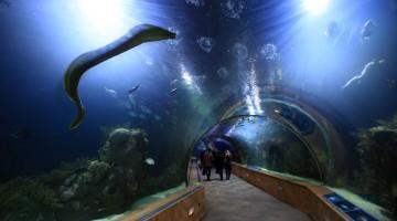 Sotto la vasca tropicale passa un tunnel subacqueo lungo 70 metri (foto: Javier Yaya Tur/Cacsa)