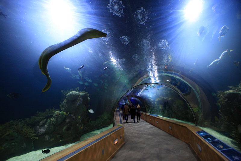 Vasche Da Bagno Oceano Prezzi : A valencia per esplorare l oceano dove viaggi