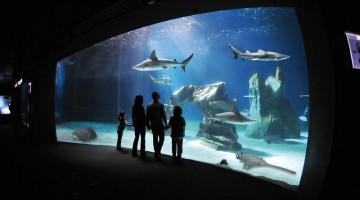 Le vasche degli squali, una delle attrazioni più gettonate dell'Acquario di Genova (foto: Costa Edutainment PH Merlofotografia)