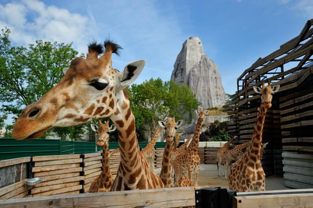 Parigi, riapre lo zoo del secolo. Scopri gli animali più buffi