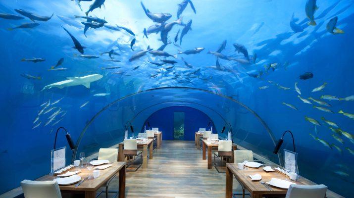 Foto Sotto il mare: 15 meraviglie da scoprire