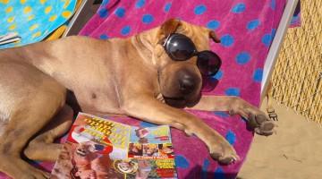 Rimini Dog No Problem  (9)