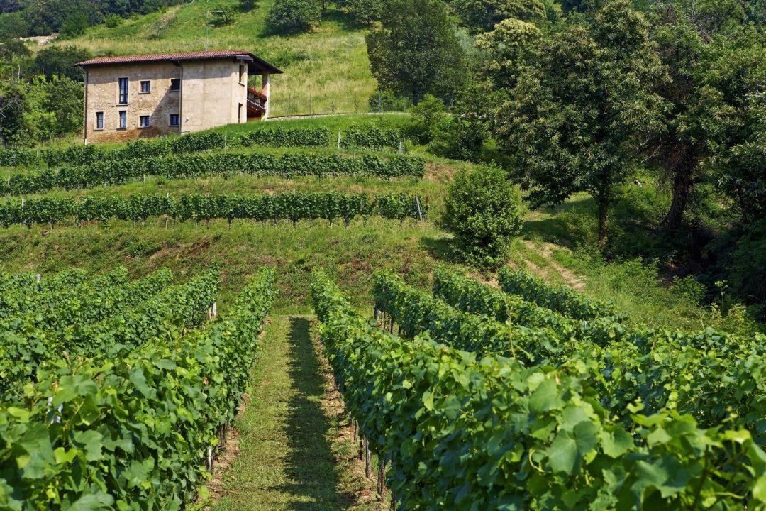 Tempo di vendemmia dalla Sicilia al Friuli