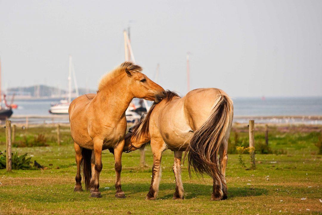 Frisia: in Olanda tra mulini, canali e dune di sabbia