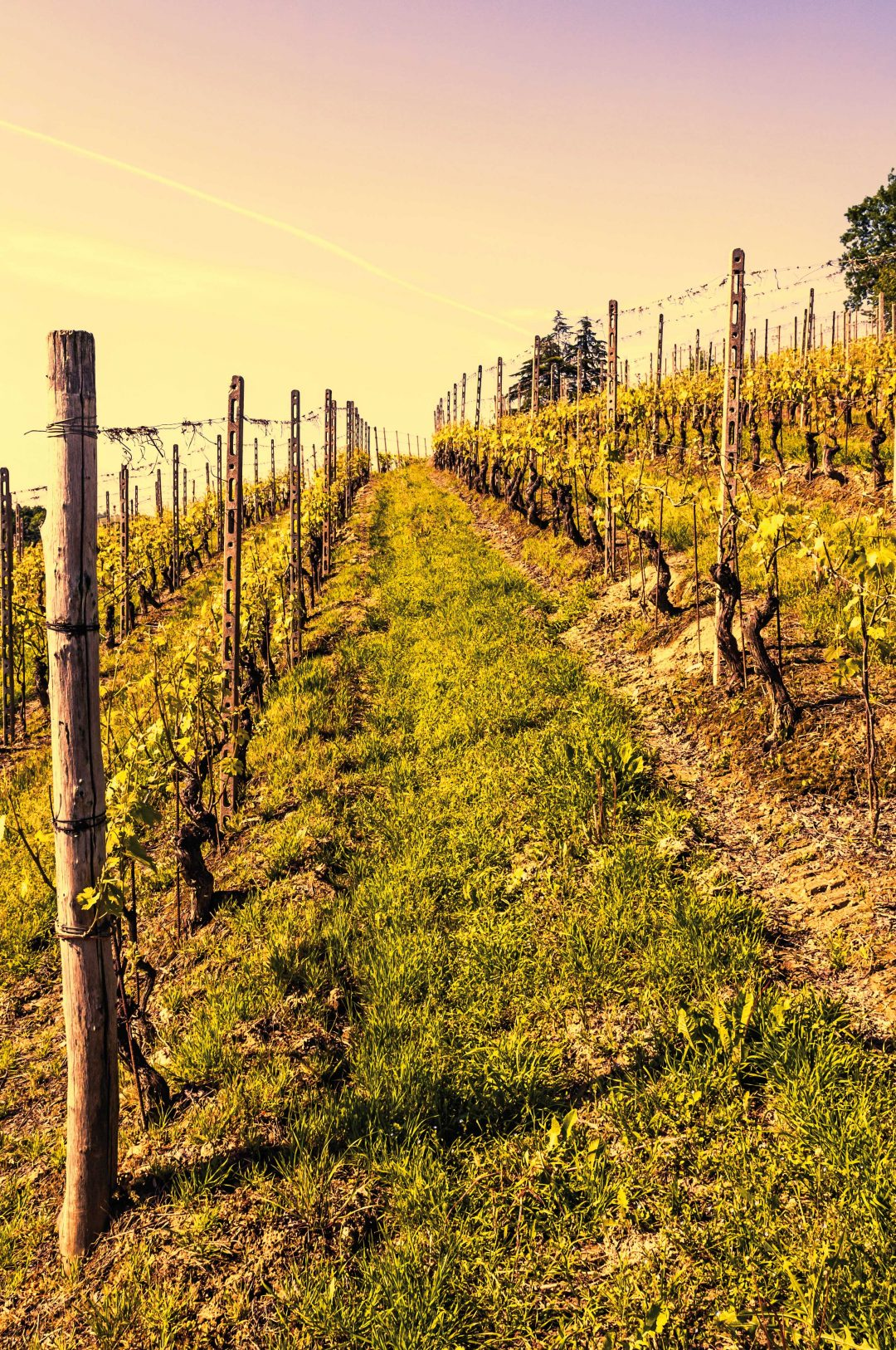 In vigna: 20 itinerari nell'Italia del vino