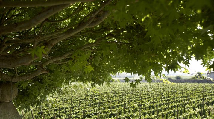 Foto I migliori wine resort in Italia