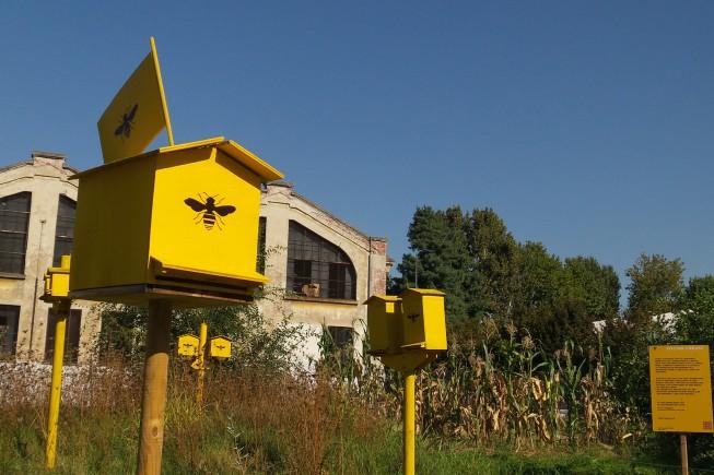 apiario1