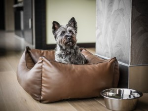 Animali in viaggio: 10 aeroporti e hotel pet-friendly