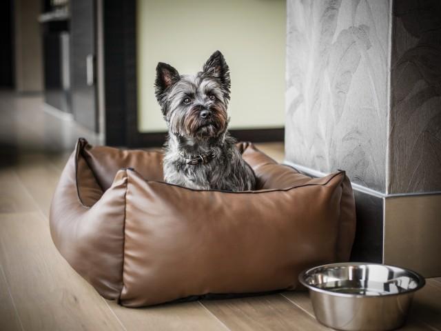 Animali in viaggio: 10 aeroporti e hotel pet-friendly