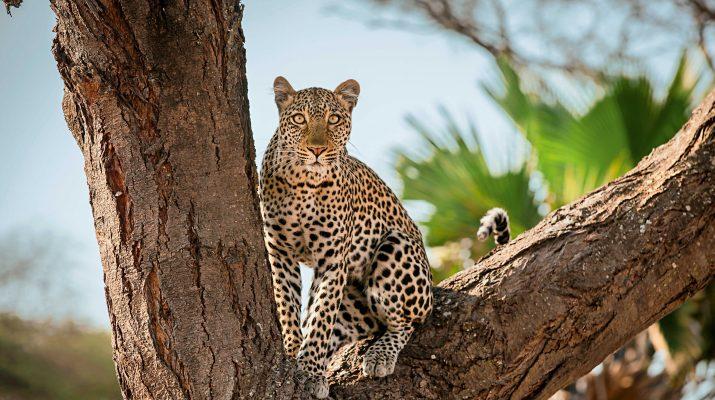 Foto Tanzania autentica: safari nei parchi del Sud