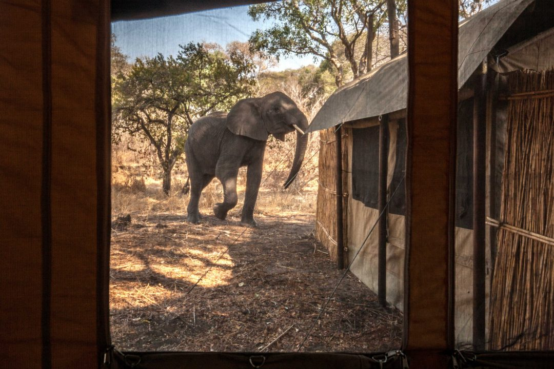 Tanzania autentica: safari nei parchi del Sud
