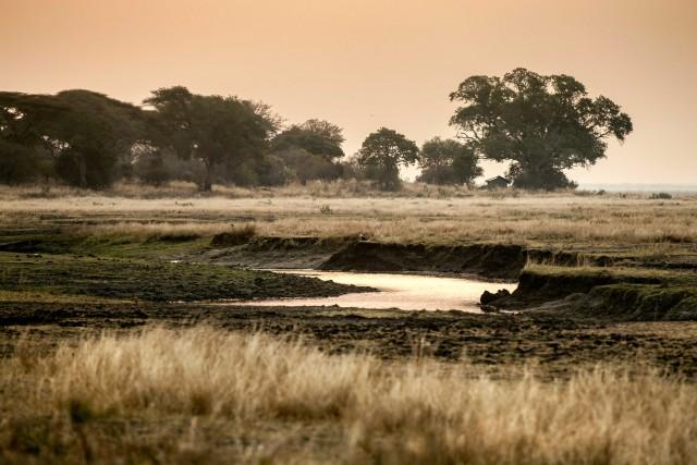 """Il Katavi National Park è uno dei parchi del Sud della Tanzania. Poco toccato dai grandi flussi turistici, è qui che si scopre da dove nasce il leggendario """"mal d'Africa""""."""
