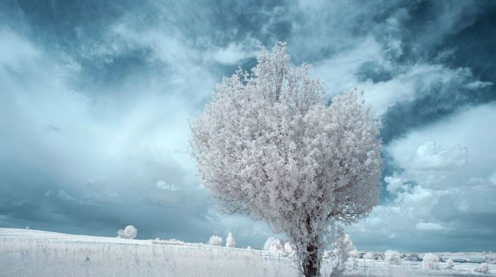Foto Le foto a infrarossi di Przemyslaw Kruk
