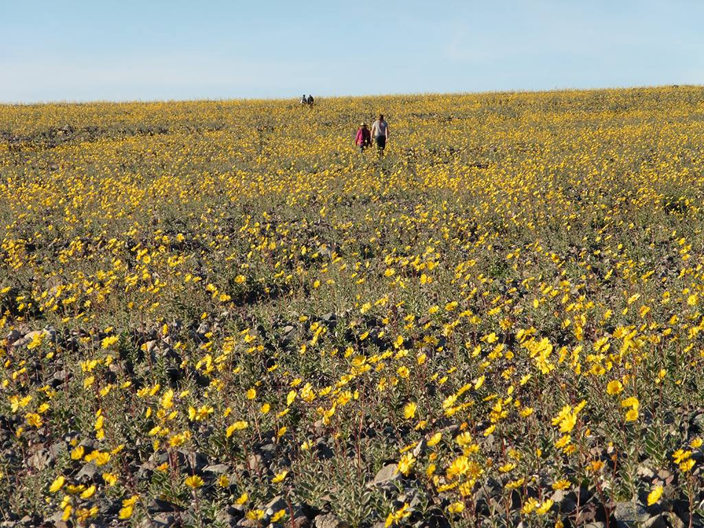Fiorisce il deserto: spettacolo di colori nella valle più arida del pianeta
