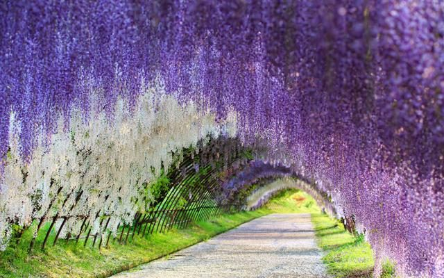 Foto 70 giardini da vedere in primavera