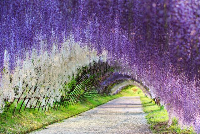 70 giardini da vedere in primavera