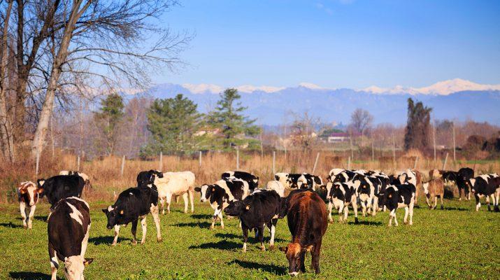 Foto Grana Padano, il tesoro della Grande Pianura