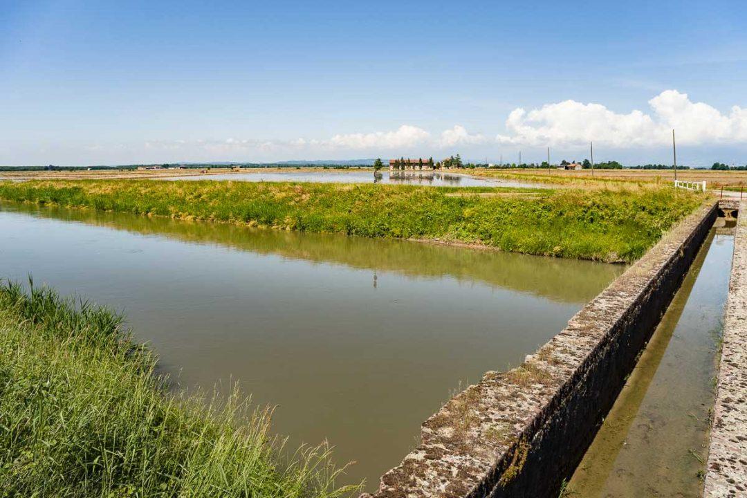 Di corsa nel riso: tra Vercelli e Novara si festeggia il canale Cavour