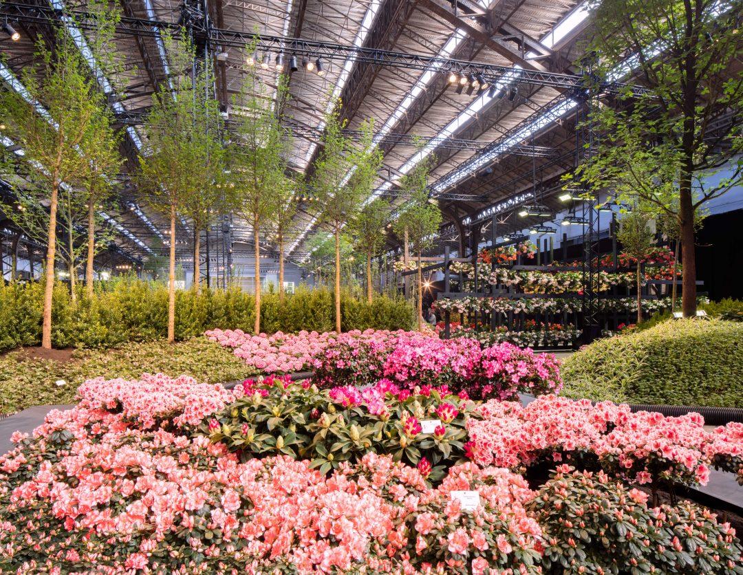 Floraliën Gent. In Belgio, la grande festa dei fiori