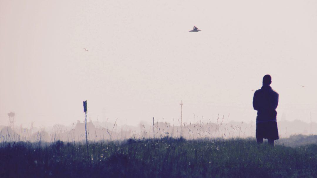 Comacchio: la Fiera del Birdwatching