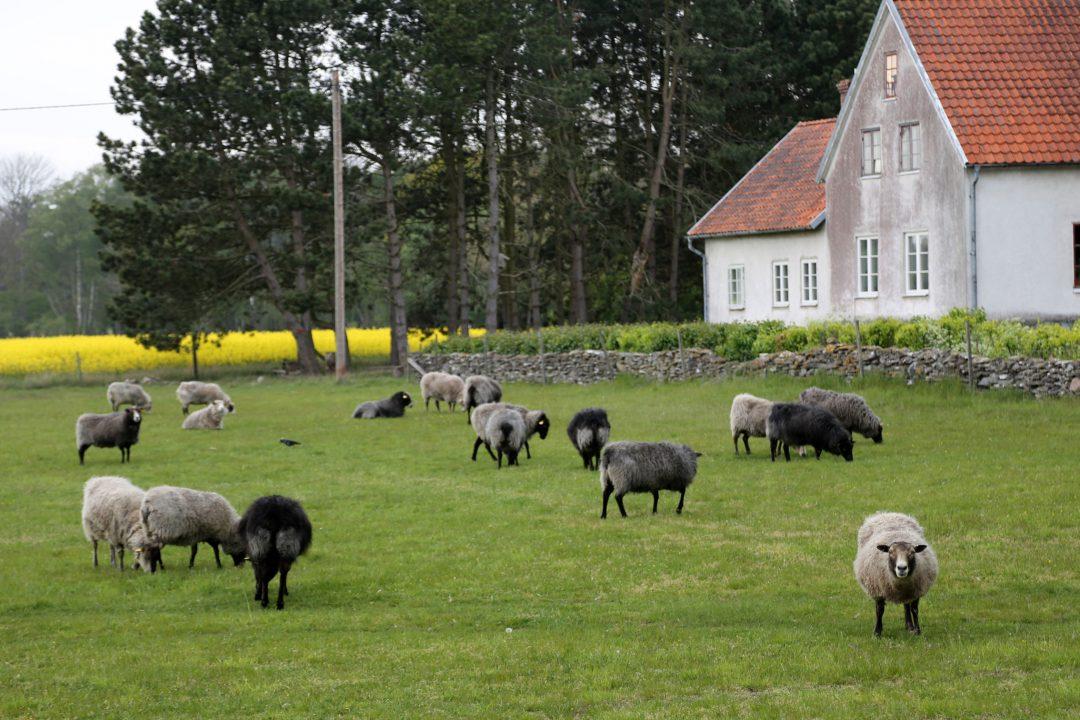Gotland: l'isola dei sogni