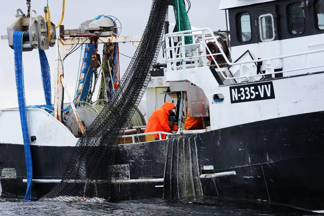 Lofoten: tutto sul Merluzzo norvegese (lo stoccafisso e il baccalà)