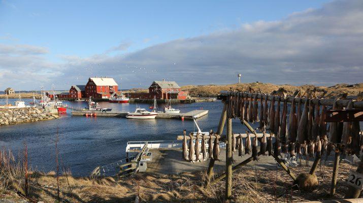 Foto Lofoten: tutto sul Merluzzo norvegese (lo stoccafisso e il baccalà)