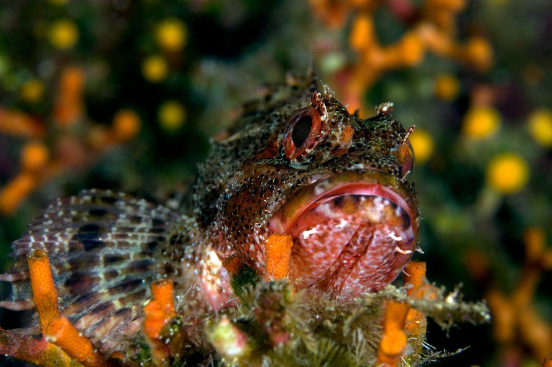 Sotto sotto…dove fare immersioni a Ustica