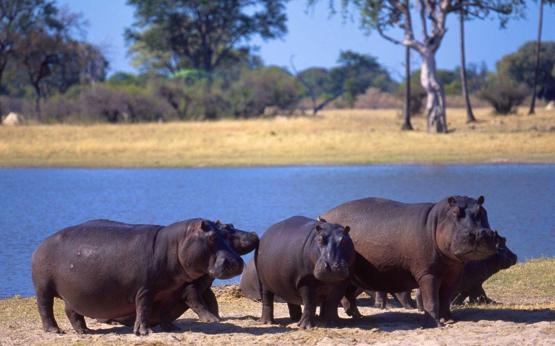 Zimbabwe: safari e natura. Paradiso d'Africa da riscoprire