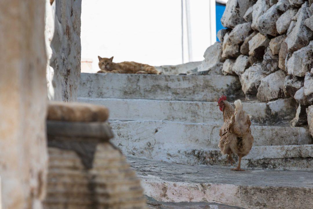 In Grecia a Kimolos, il buen retiro nelle Cicladi