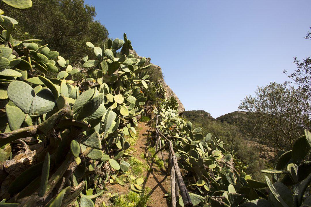 Pantelleria, dammusi sul blu