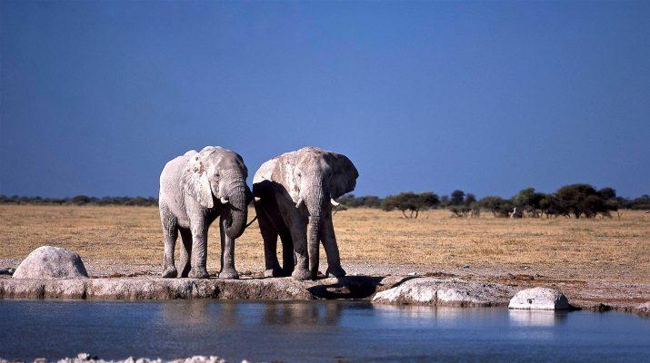 Foto Botswana: viaggio nel deserto del Kalahari